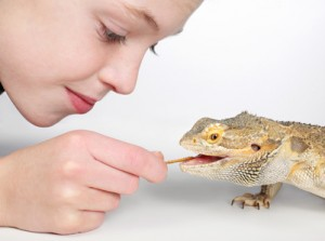 Can Bearded Dragons Eat Dandelion Leaves