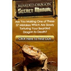 5 Fun Activities For Bearded Dragons Bearded Dragon Care 101